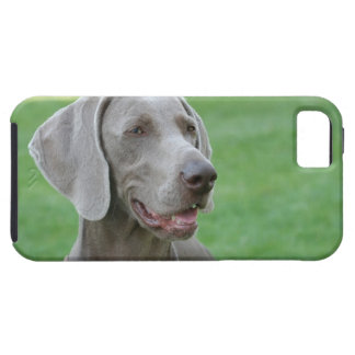 Weimaraner iPhone SE/5/5s Case