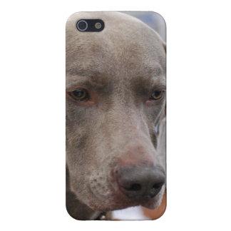 Weimaraner iPhone SE/5/5s Cover
