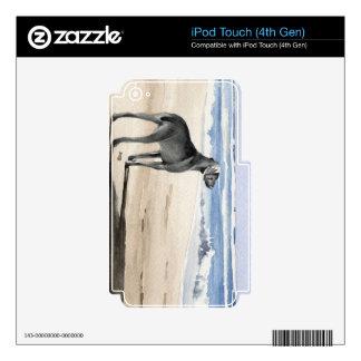Weimaraner iPod Touch 4G Skin