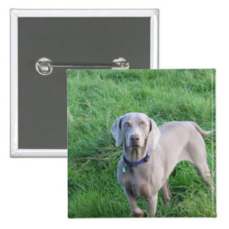 Weimaraner Lovers Button