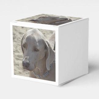 Weimaraner magnífico cajas para regalos