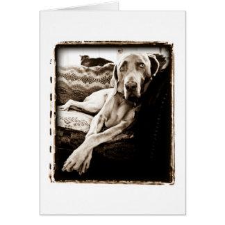 Weimaraner Nation Ballou s Chair Greeting Card