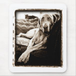 "Weimaraner Nation : ""Ballou's Chair"" Mouse Pad"