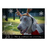"""Weimaraner Nation :""""Not A Creature was Stirring.."""" Greeting Card"""