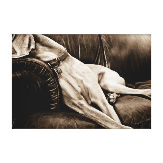 "Weimaraner Nation : ""Taking Over the Couch"" Canvas Print"