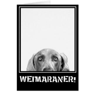 Weimaraner Nation : Weimaraner In A Box! Card