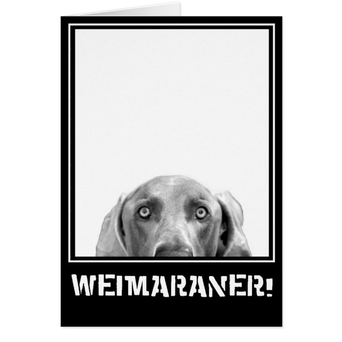 Weimaraner Nation : Weimaraner In A Box! Card