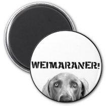 Weimaraner Nation : Weimaraner In A Box! Magnet