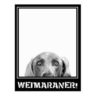 Weimaraner Nation : Weimaraner In A Box! Postcard