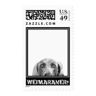 Weimaraner Nation : Weimaraner In A Box! Stamp