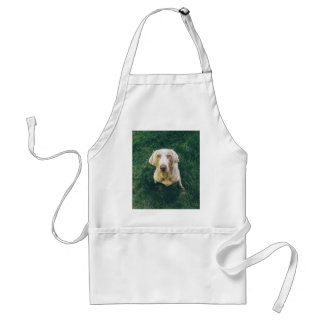 Weimaraner of the Grass Adult Apron
