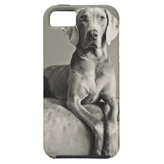Weimaraner Portrait iPhone 5 Case