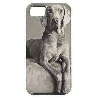 Weimaraner Portrait iPhone SE/5/5s Case