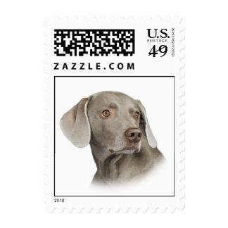 Weimaraner Postage Stamp