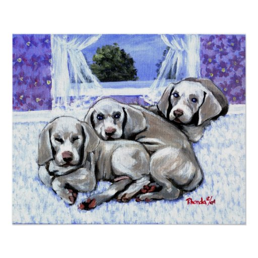 Weimaraner Puppies Dog Portrait Poster