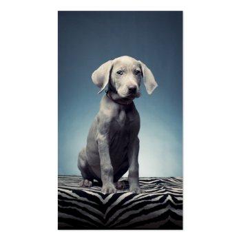 Weimaraner puppy business card template