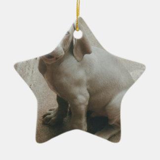 weimaraner puppy cute ceramic ornament