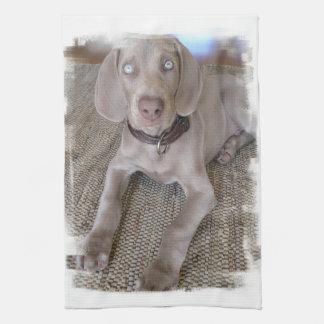 Weimaraner Puppy Kitchen Towel