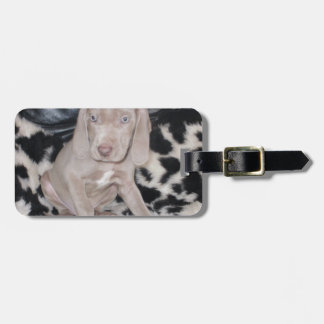 Weimaraner Puppy Luggage Tags