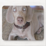 Weimaraner Puppy Mouse Pad