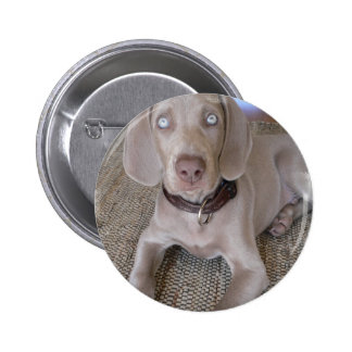 Weimaraner Puppy Round Button