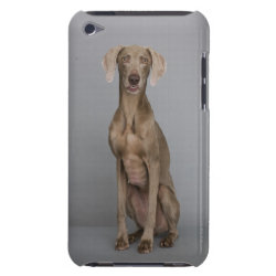 Case-Mate iPod Touch Barely There Case with Weimaraner Phone Cases design