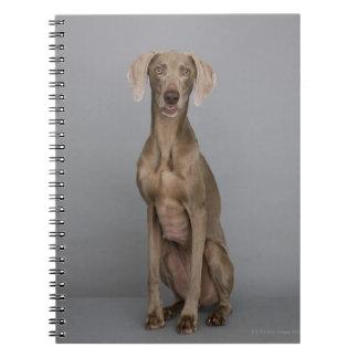 Weimaraner sitting, studio shot spiral notebook
