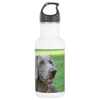 Weimaraner Stainless Steel Water Bottle