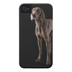 Case-Mate iPhone 4 Barely There Universal Case with Weimaraner Phone Cases design