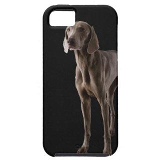 Weimaraner, studio shot iPhone SE/5/5s case