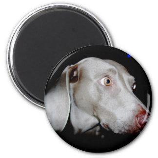 Weimaraner - The Gray Ghost Magnet