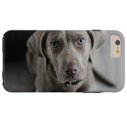 Case-Mate Barely There iPhone 6 Plus Case with Weimaraner Phone Cases design