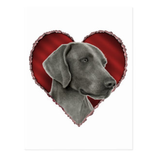 Weimaraner with Heart Postcard