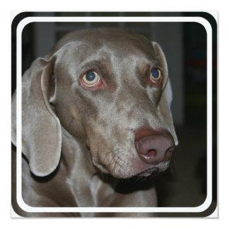 "Weimeraner Dog Invitation 5.25"" Square Invitation Card"