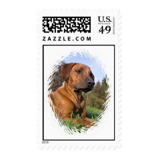 Weimeraner Postage Stamp