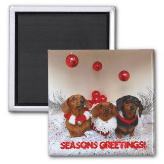 """Weiner Dog Christmas, """" Seasons Greetings!"""" Magnet"""