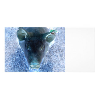 weird animal inverted blue pig image photo card
