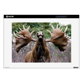 "weird bull moose decal for 15"" laptop"