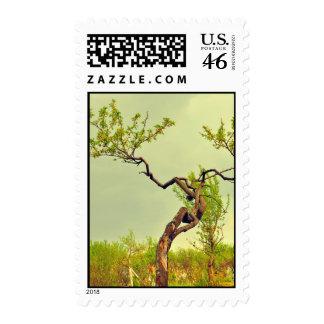 Weird tree stamp
