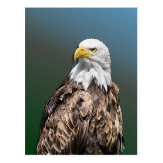 Weis head sea-eagle on postcard