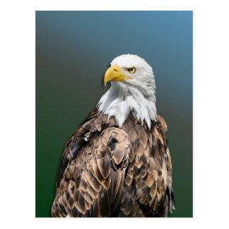 Weis head sea-eagle on postcard