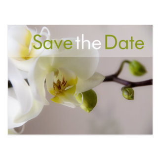 Weisse Orchidee • Save the Date Postkarte Postcard