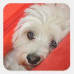 weißer Havaneser-Hund liegt auf orange Kissen Quadrataufkleber