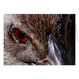 Weka Bird Card