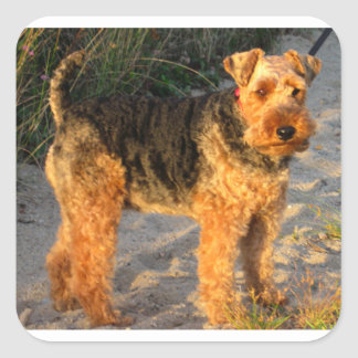 Welch_Terrier full Square Sticker