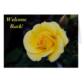 Welcome Back Yellow Rose Greeting Cards