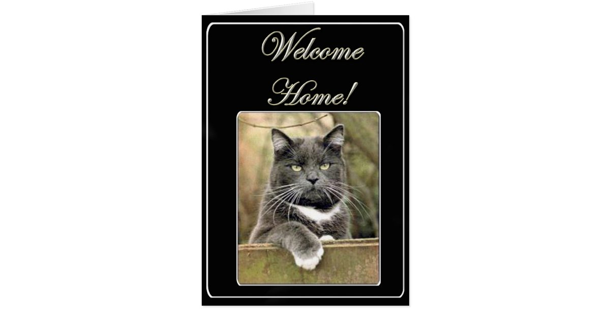 Welcome Home Cat Greeting Card Zazzle