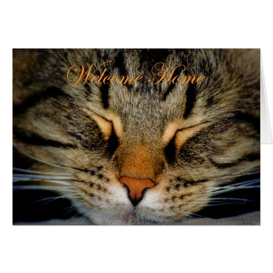 Welcome home. Missing you. home again. cat kitty Card