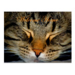 Welcome home. Missing you. home again. cat kitty Postcard