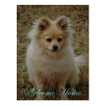 Welcome home. Missing you. home again. dog puppy Postcard